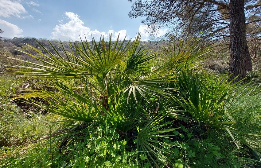 Calatafimi Segesta bosco angimbè