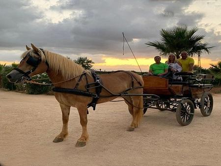 In carrozza per la campagna siciliana con il brunch