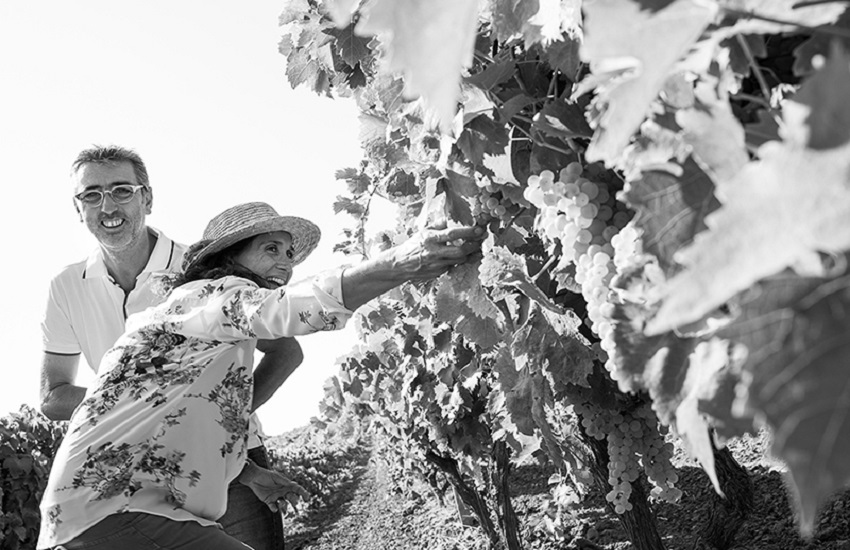La Vendemmia tra i filari: pigiatura, degustazione vini e brunch